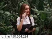 Купить «Gardener with mobile phone work in greenhouse.», фото № 30564224, снято 19 декабря 2016 г. (c) Tryapitsyn Sergiy / Фотобанк Лори