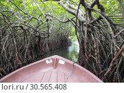 Купить «River, tropical mangroves Ceylon, view from boat», фото № 30565408, снято 25 февраля 2017 г. (c) Tryapitsyn Sergiy / Фотобанк Лори