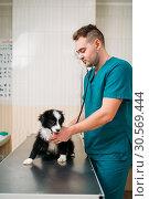 Купить «Male veterinarian examining dog, veterinary clinic», фото № 30569444, снято 4 декабря 2017 г. (c) Tryapitsyn Sergiy / Фотобанк Лори