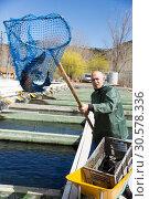 Купить «Man catching sturgeon with landing net», фото № 30578336, снято 18 октября 2019 г. (c) Яков Филимонов / Фотобанк Лори