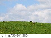 Купить «Golan Heights, Israel», фото № 30601380, снято 3 апреля 2019 г. (c) Знаменский Олег / Фотобанк Лори