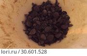 Купить «Many newborn gren turtles crawling in a plastic bucket. Gren sea turtle - Chelonia mydas, Hikaduwa, Sri Lanka», видеоролик № 30601528, снято 26 марта 2019 г. (c) Некрасов Андрей / Фотобанк Лори