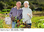 Couple of farmers at smallholding. Стоковое фото, фотограф Яков Филимонов / Фотобанк Лори