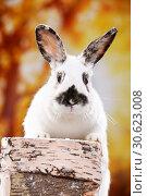 Купить «Rabbit», фото № 30623008, снято 21 апреля 2019 г. (c) age Fotostock / Фотобанк Лори