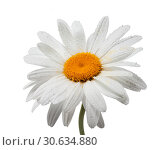 Купить «Chamomile flower with dew drops on white background isolated», фото № 30634880, снято 2 июля 2011 г. (c) Наталья Волкова / Фотобанк Лори