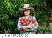 Купить «Woman professional gardener holding stack of fresh peaches», фото № 30653100, снято 11 июля 2018 г. (c) Яков Филимонов / Фотобанк Лори
