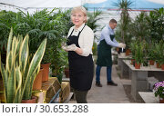 Купить «Portrait of female gardener with blooming flower who is taking care of them», фото № 30653288, снято 23 февраля 2018 г. (c) Яков Филимонов / Фотобанк Лори
