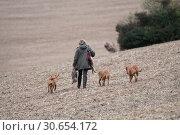 Купить «The picking up team walking to the next drive with thier dogs», фото № 30654172, снято 20 сентября 2019 г. (c) Ingram Publishing / Фотобанк Лори