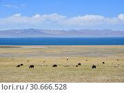 Купить «Тибет, козы и овцы пасутся на берегу озера Bum Co (Бум Тсо) в солнечный летний день», фото № 30666528, снято 5 июня 2018 г. (c) Овчинникова Ирина / Фотобанк Лори
