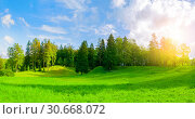 Купить «Forest spring landscape - dense forest trees in the valley in sunny weather, panoramic view», фото № 30668072, снято 21 сентября 2017 г. (c) Зезелина Марина / Фотобанк Лори