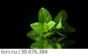 Купить «Bunch of fresh green mint on black background», видеоролик № 30676384, снято 30 апреля 2019 г. (c) Peredniankina / Фотобанк Лори