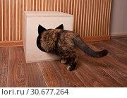 Купить «Cat in the cat house», фото № 30677264, снято 18 марта 2019 г. (c) Наталья Двухимённая / Фотобанк Лори