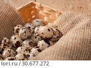 Купить «Quail eggs in the basket», фото № 30677272, снято 4 августа 2013 г. (c) Наталья Двухимённая / Фотобанк Лори