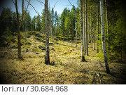 Купить «Typical forest vegetation of Sweden.», фото № 30684968, снято 21 апреля 2019 г. (c) age Fotostock / Фотобанк Лори