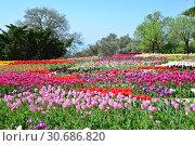Купить «Никитский ботанический сад. Ялта. Крым», фото № 30686820, снято 27 апреля 2019 г. (c) Игорь Архипов / Фотобанк Лори