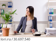 Young pregnant employee working in the office. Стоковое фото, фотограф Elnur / Фотобанк Лори