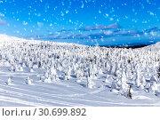 Beautiful winter wonderland during the sunny day. Snow-covered trees of unusual shape. Стоковое фото, фотограф Евгений Ткачёв / Фотобанк Лори
