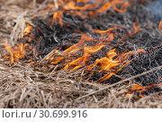 Купить «Поджигание травы весной - сезонный пал», фото № 30699916, снято 18 апреля 2019 г. (c) А. А. Пирагис / Фотобанк Лори