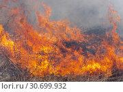 Купить «Красно-оранжевое пламя огня на фоне горения сухой травы в лесу весной. Мягкий фокус, размытие от сильного огня», фото № 30699932, снято 18 апреля 2019 г. (c) А. А. Пирагис / Фотобанк Лори