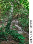 Купить «Krushuna waterfalls in Bulgaria», фото № 30730940, снято 2 июля 2018 г. (c) Sergii Zarev / Фотобанк Лори