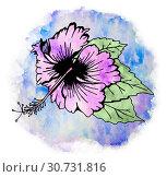 Купить «Hibiscus flower with leaves», иллюстрация № 30731816 (c) Любовь Назарова / Фотобанк Лори