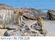 Купить «Макак-крабоед (лат. Macaca fascicularis) или яванский макак. Две обезьяны сидят на скалах возле берега моря на острове в Таиланде», фото № 30738228, снято 19 марта 2019 г. (c) Григорий Писоцкий / Фотобанк Лори