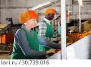 Купить «Woman working on producing sorting line at fruit warehouse», фото № 30739016, снято 15 декабря 2018 г. (c) Яков Филимонов / Фотобанк Лори