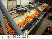 Купить «View of conveyor belt of sorting production line», фото № 30761208, снято 15 декабря 2018 г. (c) Яков Филимонов / Фотобанк Лори