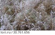 Купить «Замерзшая трава крупным планом октябрьским утром», видеоролик № 30761656, снято 22 октября 2017 г. (c) Виктор Карасев / Фотобанк Лори