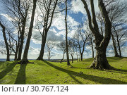 Купить «Early spring at Chanctonbury Ring, prehistoric hillfort in South Downs National Park, West Sussex, England.», фото № 30767124, снято 17 марта 2019 г. (c) age Fotostock / Фотобанк Лори