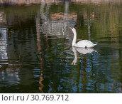 Купить «Portrait of one beautiful white swan in water with waves and ripples», фото № 30769712, снято 6 мая 2019 г. (c) Наталья Николаева / Фотобанк Лори