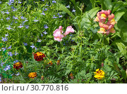 Купить «Садовые цветы на клумбе в саду», эксклюзивное фото № 30770816, снято 14 июля 2018 г. (c) Елена Коромыслова / Фотобанк Лори