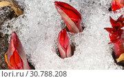 Купить «Time-Lapse shot of melting snow», видеоролик № 30788208, снято 22 апреля 2019 г. (c) Игорь Жоров / Фотобанк Лори