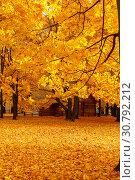 Купить «Autumn and yellow maple leaves in the park in Kolomenskoye park in autumn season aerial view, Moscow, Russia», фото № 30792212, снято 8 декабря 2019 г. (c) Mikhail Starodubov / Фотобанк Лори