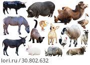 Купить «set of farm animals», фото № 30802632, снято 6 декабря 2019 г. (c) Яков Филимонов / Фотобанк Лори