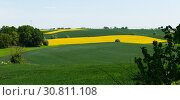 Flowering rape field with in the landscape in Poland. Стоковое фото, фотограф Яков Филимонов / Фотобанк Лори