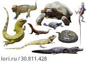 Купить «set of reptiles isolated», фото № 30811428, снято 20 октября 2019 г. (c) Яков Филимонов / Фотобанк Лори