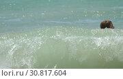 Купить «Vacationeers on the waves», видеоролик № 30817604, снято 12 ноября 2017 г. (c) Игорь Жоров / Фотобанк Лори