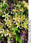 Background of bright purple and white flowers with green leaves. Стоковое фото, фотограф Моисеев Дмитрий / Фотобанк Лори