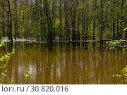 Купить «Spring forest flooded during high water», фото № 30820016, снято 19 мая 2019 г. (c) Евгений Харитонов / Фотобанк Лори