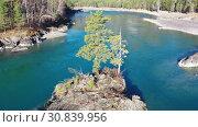 Купить «Spin around a rocky island with a pine tree on Altai Katun river», видеоролик № 30839956, снято 11 мая 2019 г. (c) Serg Zastavkin / Фотобанк Лори