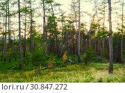 Купить «Forest landscape with pine forest trees on the mountain slope. Mountain forest summer nature view», фото № 30847272, снято 23 августа 2013 г. (c) Зезелина Марина / Фотобанк Лори