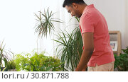 Купить «indian man taking care of houseplants at home», видеоролик № 30871788, снято 27 мая 2019 г. (c) Syda Productions / Фотобанк Лори