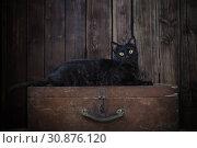 black cat on dark wooden background. Стоковое фото, фотограф Майя Крученкова / Фотобанк Лори