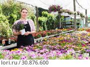 Купить «Florist woman gardening in glasshouse», фото № 30876600, снято 19 апреля 2018 г. (c) Яков Филимонов / Фотобанк Лори