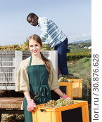 Купить «Positive woman and man vineyard workers sorting new grapes harvest in boxes», фото № 30876628, снято 12 сентября 2018 г. (c) Яков Филимонов / Фотобанк Лори