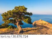 Купить «Top view of Cape Kapchik (Lizard), Crimea, Russia», фото № 30876724, снято 16 июня 2015 г. (c) Наталья Волкова / Фотобанк Лори