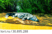 The Nile crocodile in Chamo lake, Ethiopia (2012 год). Редакционное фото, фотограф Сергей Майоров / Фотобанк Лори