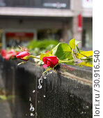 Купить «Water from a fountain flows down over red roses», фото № 30916540, снято 4 декабря 2009 г. (c) easy Fotostock / Фотобанк Лори