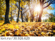 Купить «Bright foliage in autumn park», фото № 30926620, снято 5 октября 2016 г. (c) Sergey Borisov / Фотобанк Лори